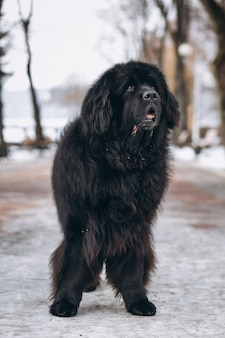 Grande cane nero fuori nel parco