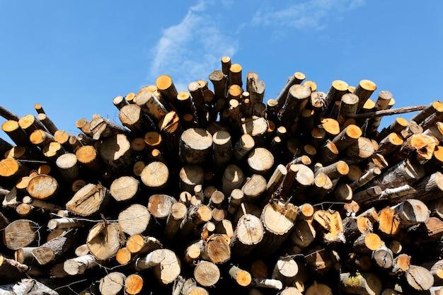 Grande catasta di legna e cielo blu in primavera