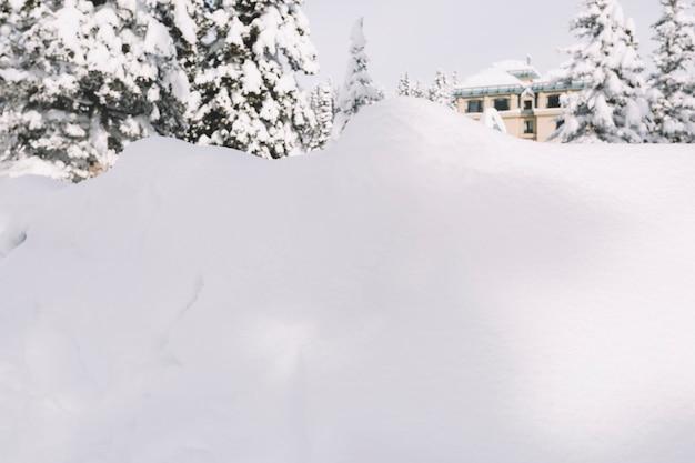 Grande cumulo di neve sullo sfondo di alberi di pino