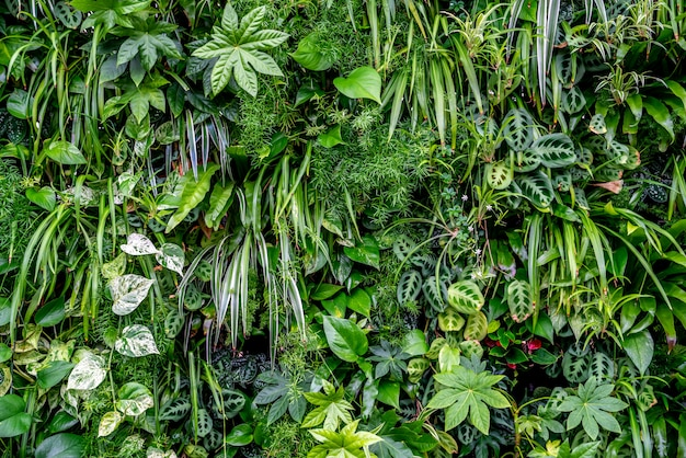 Grande gruppo di piante della giungla