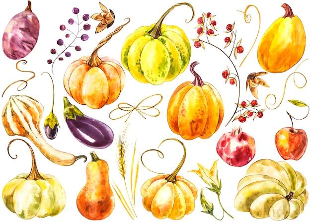 Grande set di zucche. pittura ad acquerello disegnata a mano su bianco. illustrazione ad acquerello