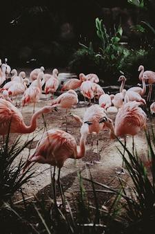 Grande stormo di bellissimi fenicotteri rosa in un campo tropicale esotico