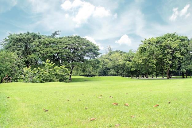 Grandi alberi nel giardino