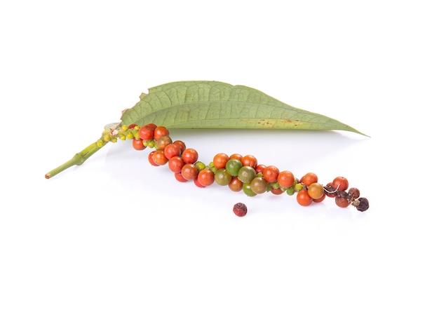 Grani di pepe rossi e verdi freschi per tempo di harverst isolato su una priorità bassa bianca.