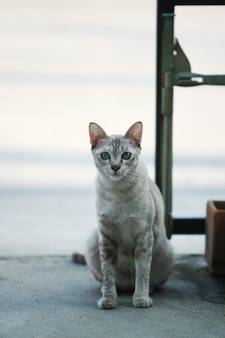 Gray cat seduto sulla strada