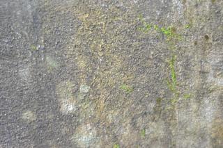 Grezzo e hardcore struttura della parete trama
