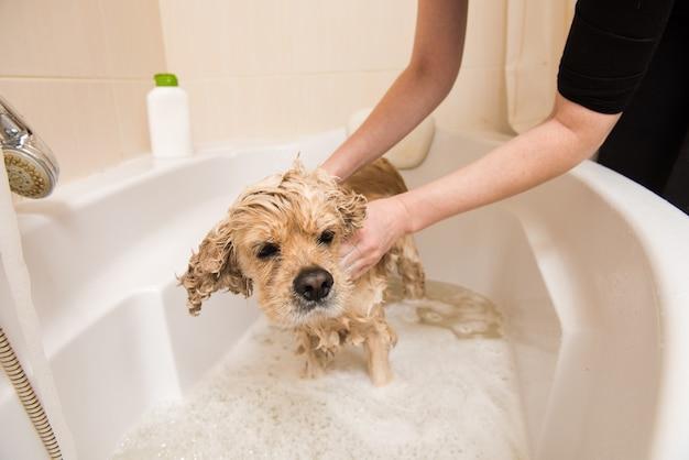 Groomer lava il cane con schiuma e acqua
