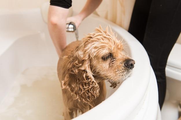Groomer lava il cane