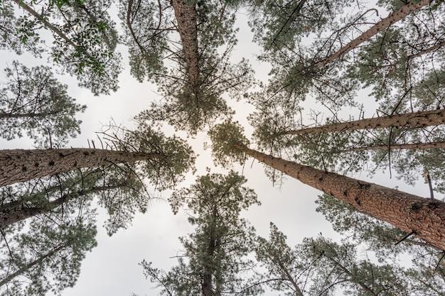 Gruppo di alberi dal basso verso il cielo