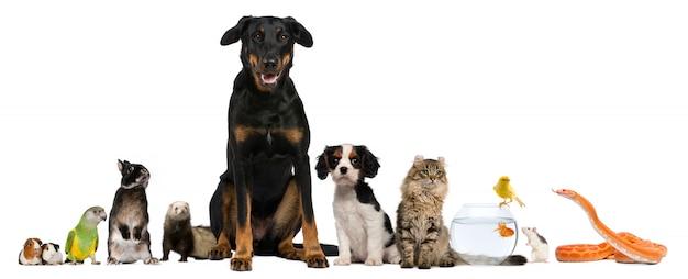 Gruppo di animali domestici che si siedono davanti al fondo bianco