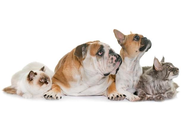 Gruppo di animali domestici
