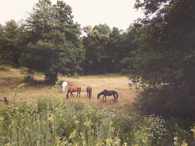 Gruppo di cavalli al pascolo su un prato estivo