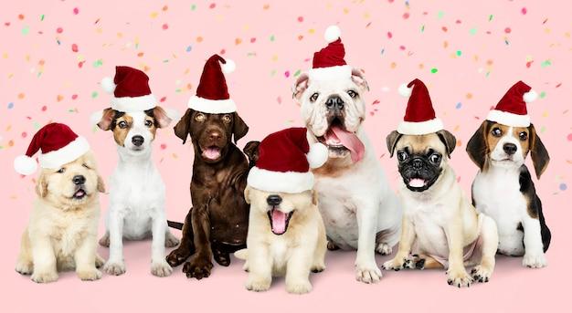 Gruppo di cuccioli che indossano cappelli di natale
