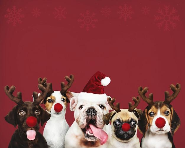 Gruppo di cuccioli che indossano costumi di natale