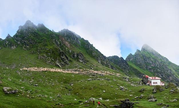 Gruppo di escursionisti che camminano sulla traccia turistica. grande gruppo di persone che salgono su montagne rocciose verso le vette e grandi stormi di pecore che pascolano su un altro lato della valle. casa dei pastori solitaria.