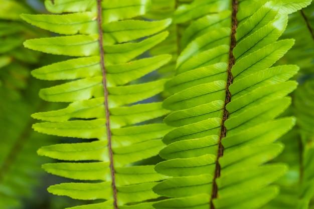 Gruppo di foglie verdi a forma lunga