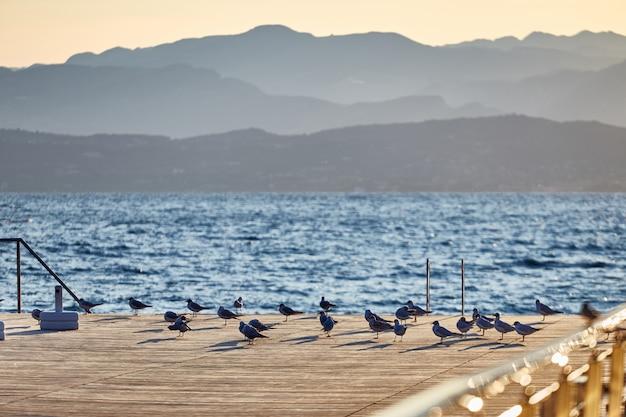 Gruppo di gabbiani sul piccolo ancoraggio al tramonto