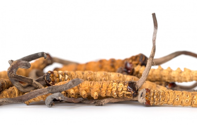 Gruppo di ophiocordyceps sinensis o funghi cordyceps questa è un'erba