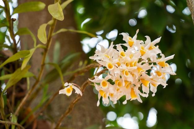 Gruppo di orchidee giallastre
