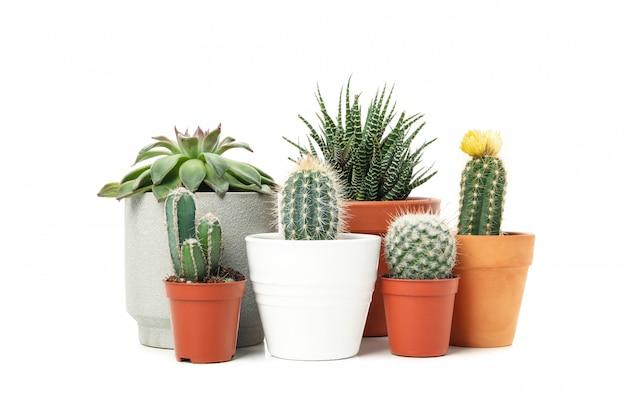 Gruppo di piante succulente isolato su superficie bianca