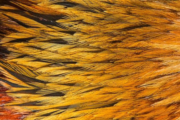 Gruppo di piume marrone brillante di alcuni uccelli