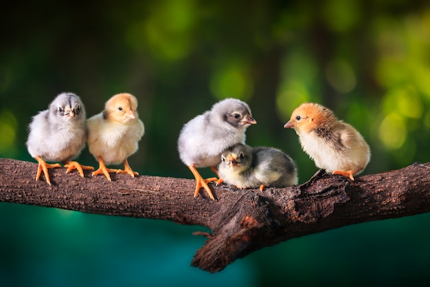 Gruppo di pulcini carini sui rami dell'albero