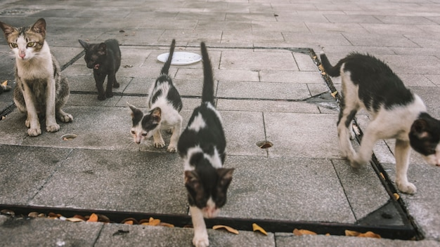Gruppo di simpatici gatti di strada e gattini
