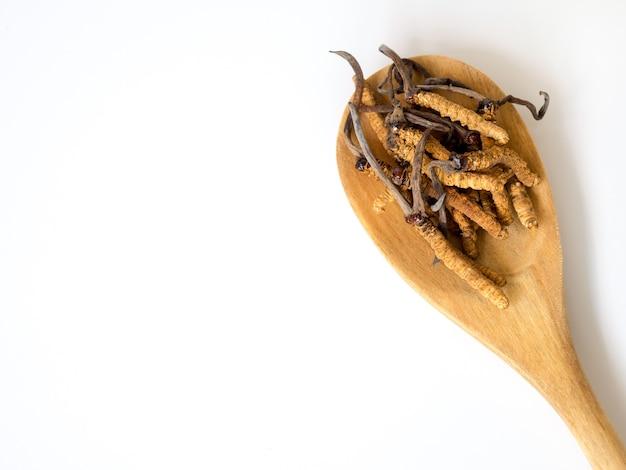 Gruppo di sinusis di ophiocordyceps o cordyceps del fungo disposti sul cucchiaio di legno
