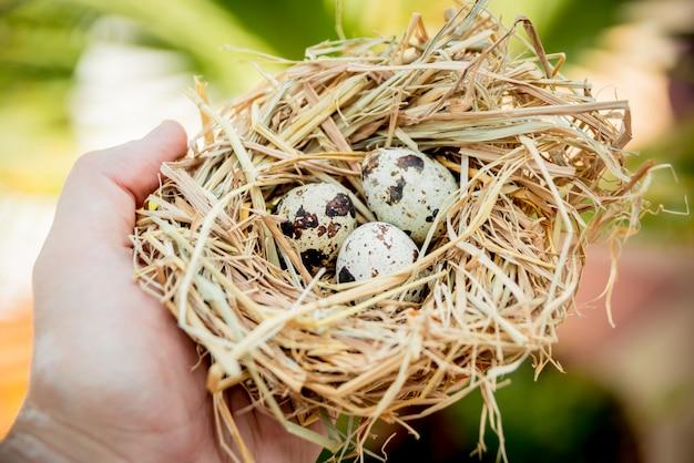 Gruppo di uova di quaglia fresche.