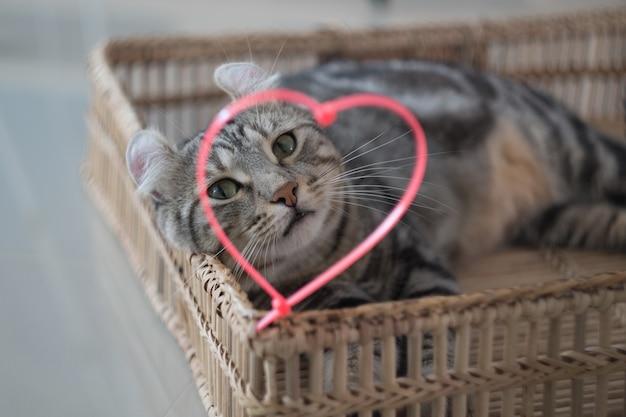 Guarda attraverso il tuo cuore, mi vedrai. (bel gatto)