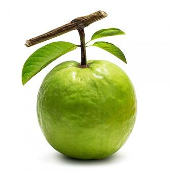 Guava isolata