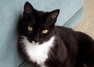 Guinness il gatto