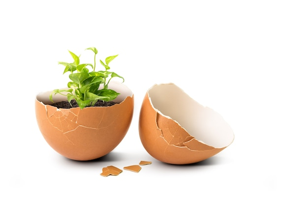 Guscio d'uovo rotto interno del germoglio della pianta verde isolato su bianco