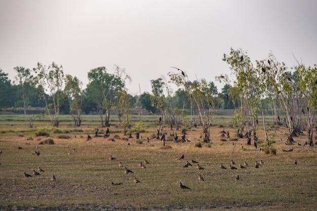 Habitat del falco in nakhonnayok, tailandia