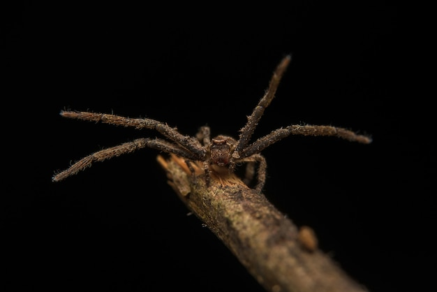 Habitat della natura predatore del ragno di salto