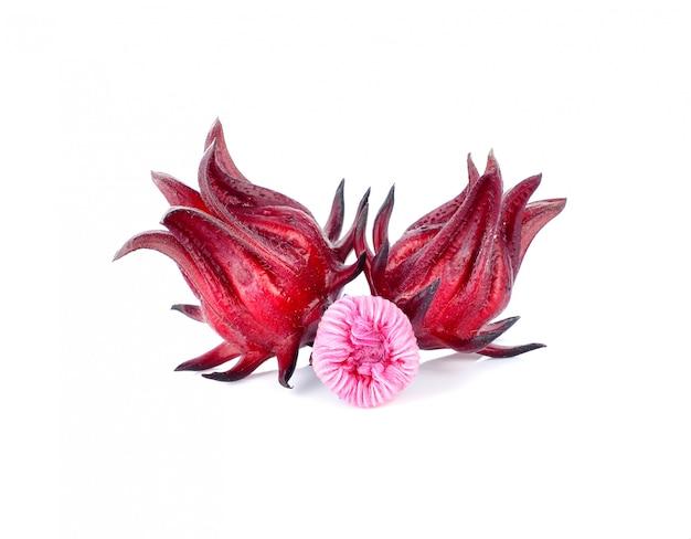 Hibiscus sabdariffa o frutti di rosella isolati su fondo bianco.