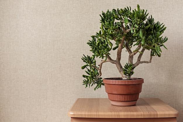Hobbit di piccoli bonsai che cresce in un vaso di fiori rosso
