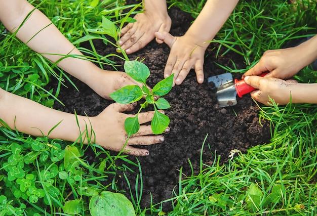 I bambini piantano le piante nel giardino. messa a fuoco selettiva