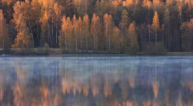 I bei alberi di betulla gialli nella foresta si riflettono nel lago nebbioso di mattina all'inizio dell'autunno