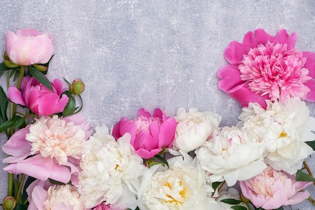 I bei fiori della peonia rasentano il fondo grigio. copyspace, vista dall'alto. biglietto d'auguri