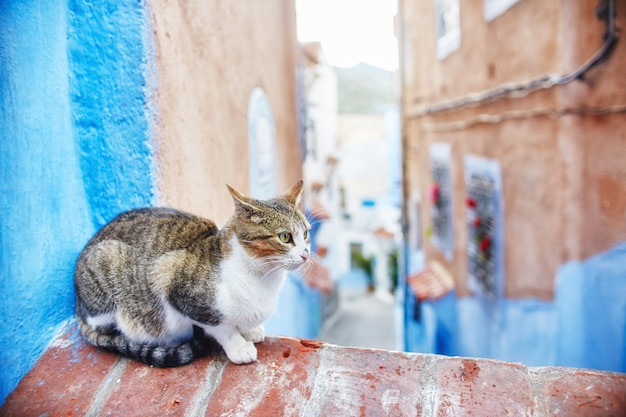 I bei gatti randagi camminano nelle strade del marocco