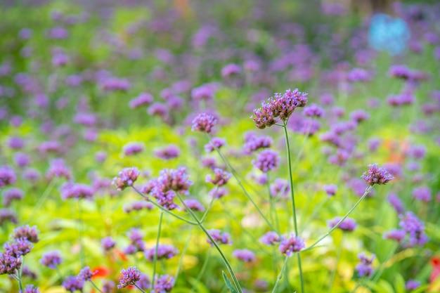 I bei piccoli fiori blu dell'erba selvatica si chiudono su fondo vago