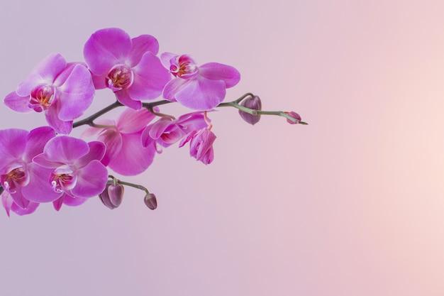 I bellissimi fiori di orchidea