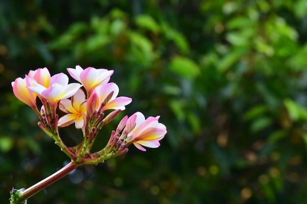 I bellissimi fiori nel giardino sbocciano in molti colori e sembrano rinfrescanti.