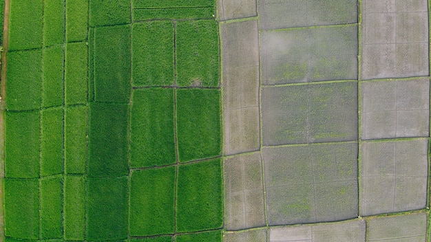 I campi a bali sono fotografati da un drone