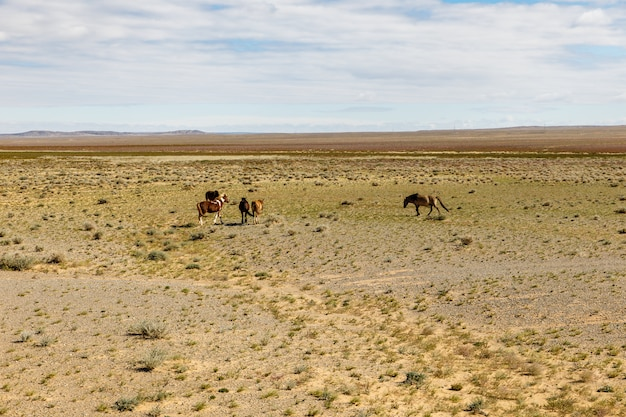 I cavalli selvaggi pascolano nel deserto del gobi, in mongolia