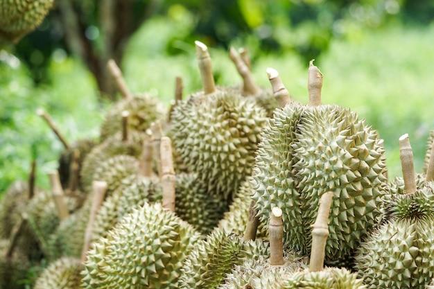 I clienti scelgono di acquistare il durian dai giardinieri di chanthaburi.