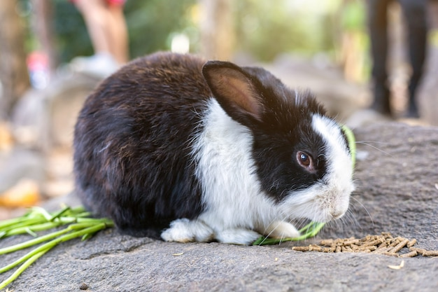 I conigli mangiano l'alimento in gabbia al giardino tailandia della fattoria degli animali per il viaggio dei viaggiatori della gente tailandese