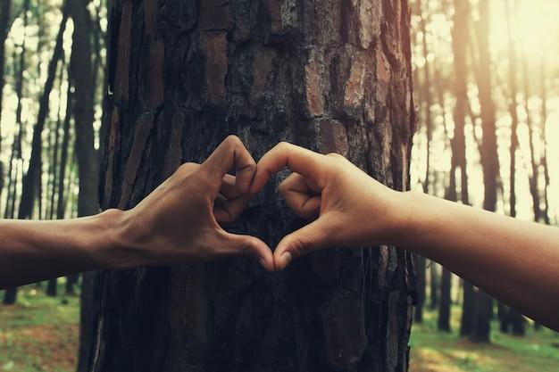 I cuori della mano della gente modellano sull'albero con il sole