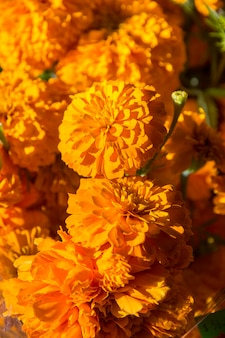 I fiori di cempasuchil si chiudono su, il giorno della celebrazione morta